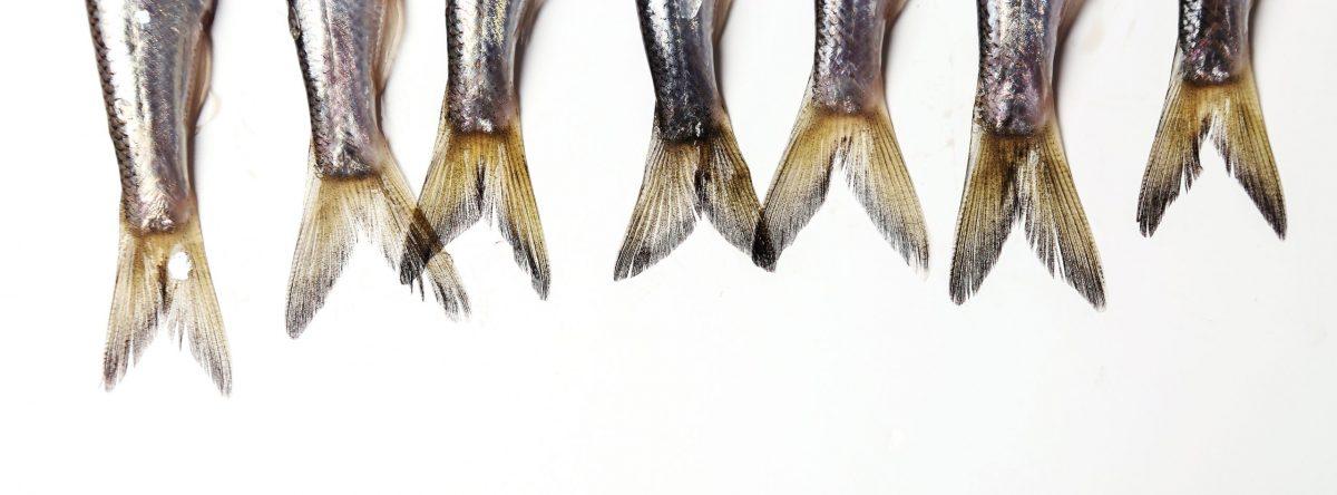 La profondità dell'alta cucina in 5 pesci