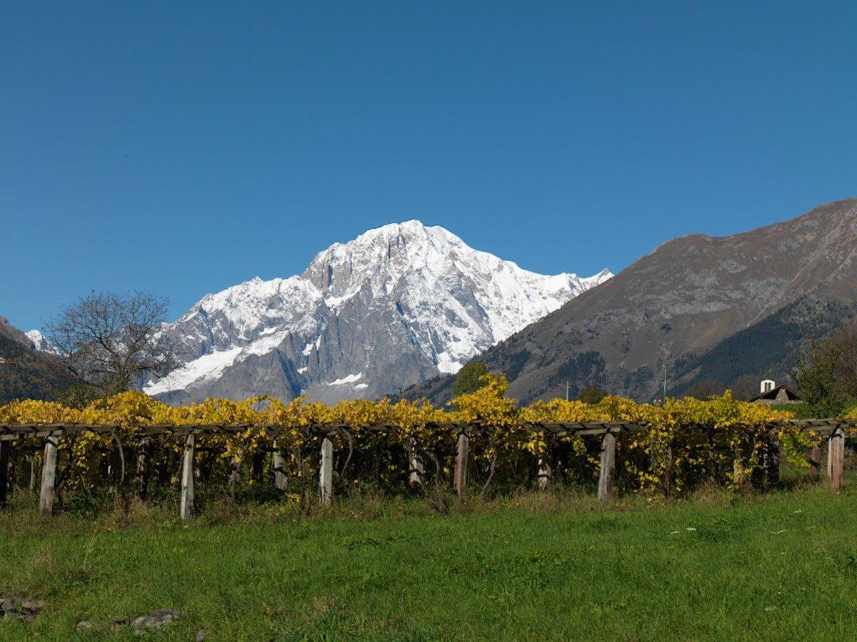 Cave Mont Blanc: un viaggio tra i vitigni più alti d'Europa