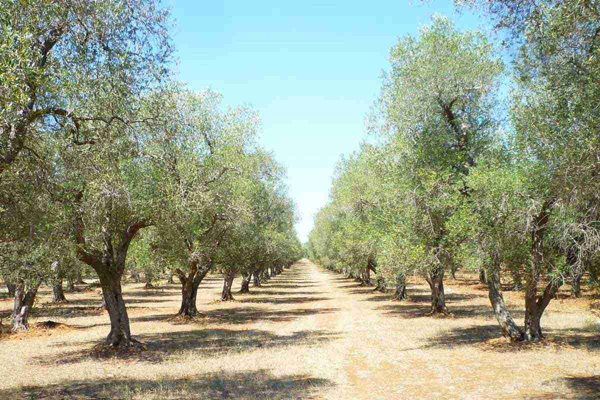 Tenuta Corallo, il wine resort che racconta la storia di Otranto