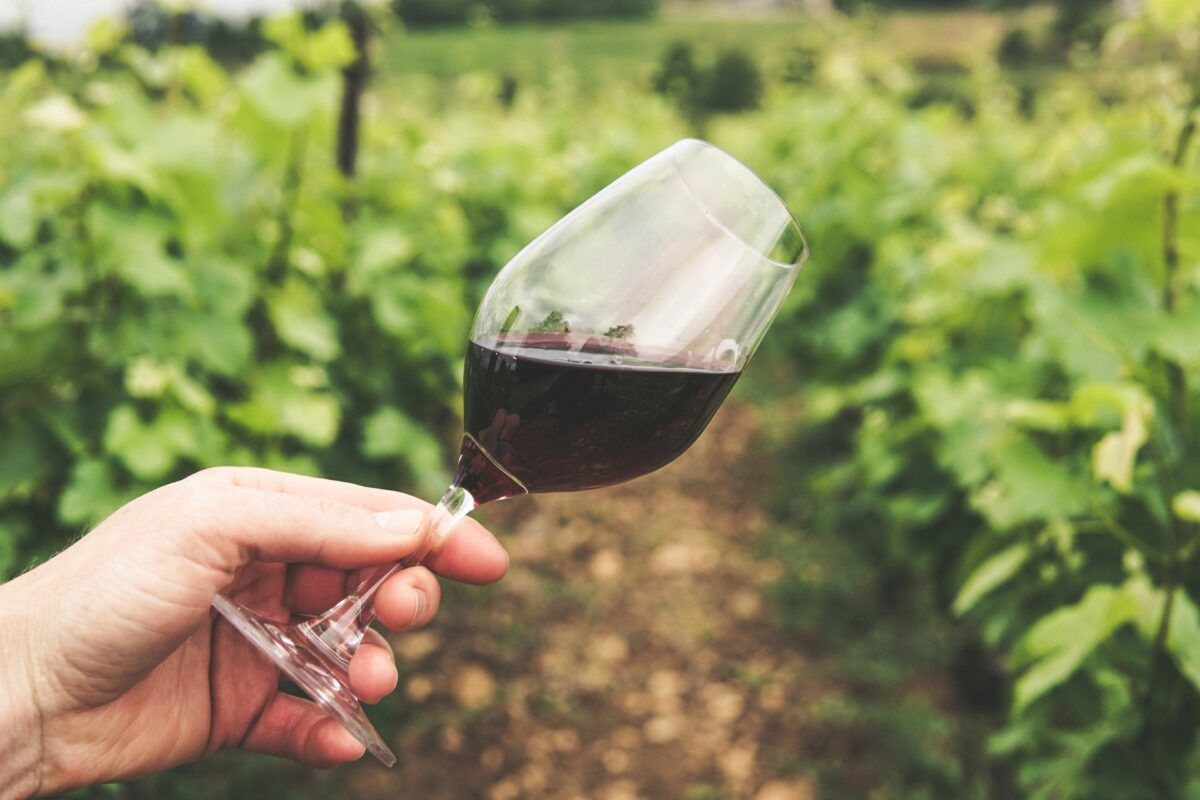 La rinascita delle aziende vinicole italiane