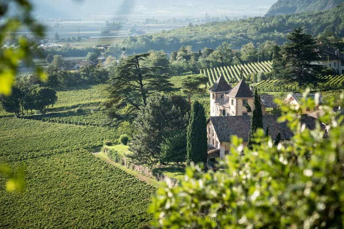 Alto Adige: 5 cantine da visitare