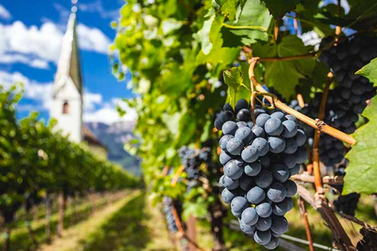 Lagrein, il potere di un vino… rivoluzionario